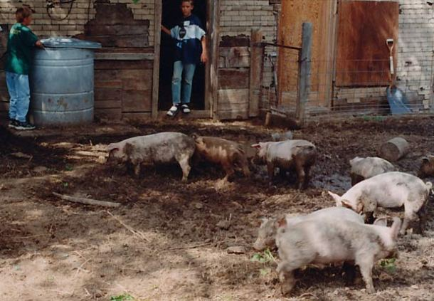 My cousins feed slop to grateful hogs in Hinsdale, Montana Photo credit: Holter Family Collection