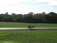 An Amish horse and buggy in early morning amid fields of green, from my relatives' house near Chetek.