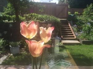tuliips